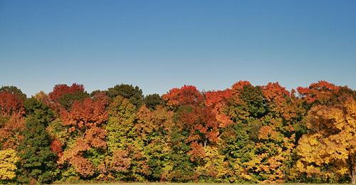 Fall-Arboretum.jpg