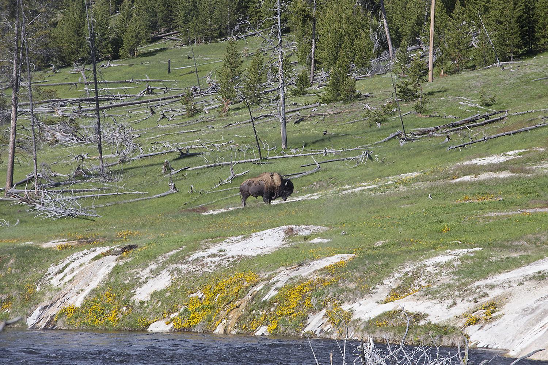 Fairy Falls hike, Yellowstone National Park