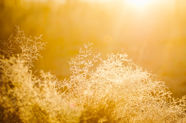 blur-bright-bushes-545313.jpg