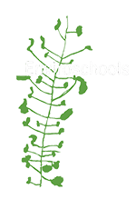 Enviro School - GOLD