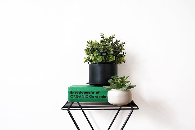 Fellow plant parents and garden geeks: come check out our booth on July 13th at Urban Chestnut and snag some upcycled planters and vintage garden manuals, among many other unique items! . . . #stl #stlouisgram #stlouis #saintlouis #ucbc #urbanchestnut #shopstl #shoplocal #stlmade #madeinstl #smallbusiness #vintage #reclaimed #repurposed #missouri #MO #midwest #midcentury #homegoods #stllocal #shopsecondhand #summermarkt