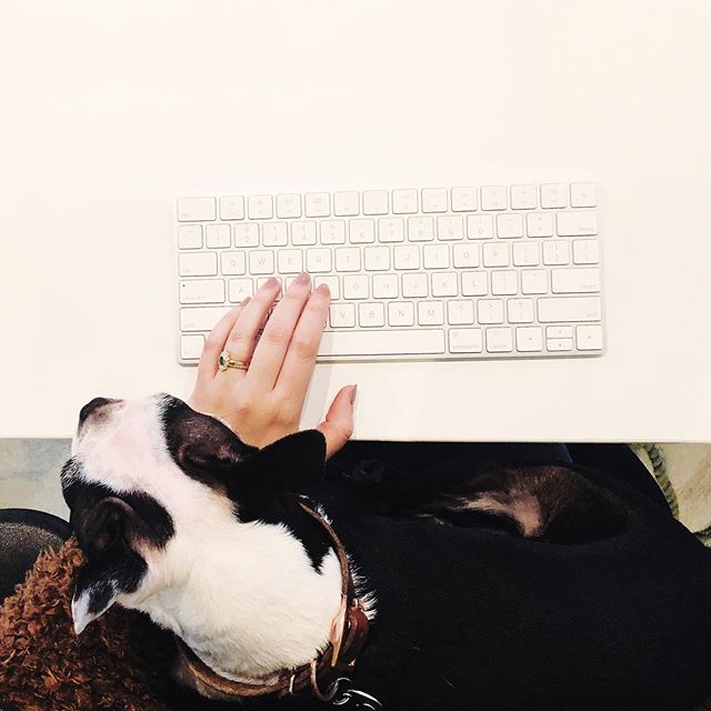 Sweetest work bebe #pennyloutheboston . . . . #abmlifeiscolorful #abmhappylife #abmlifeissweet #dscolor #colorventures  #thehappynow #flashesofdelight #livethelittlethings #livecolorfully #bostonterriercult #prettylittlething #thatcolorproject #vsco #vscocam #vscodaily #persuepretty #mybeautifulmess #acolorstory #creativelyfound #darlingmoment #dogsofinstagram #bostonterrier #puppiesofinstagram #bostonterrierlove #bostonterrierpuppy #acolorstory