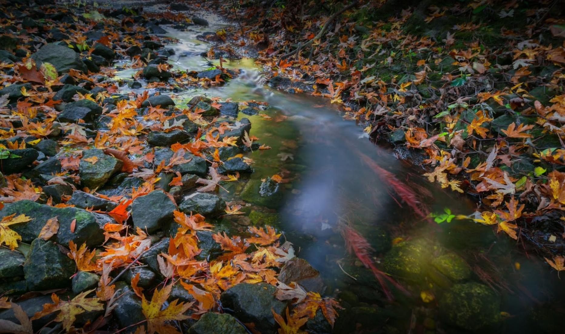 Duncan Creek Park. Photo credit: Sean Liu