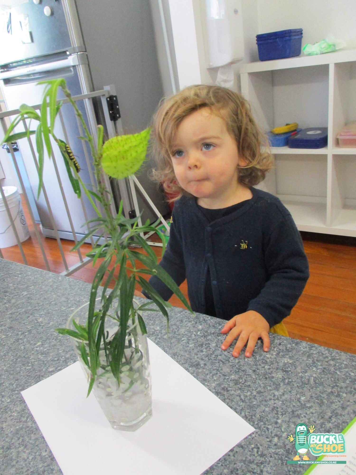 buckle-my-shoe-childcare-tauranga-butterfly-9.jpg