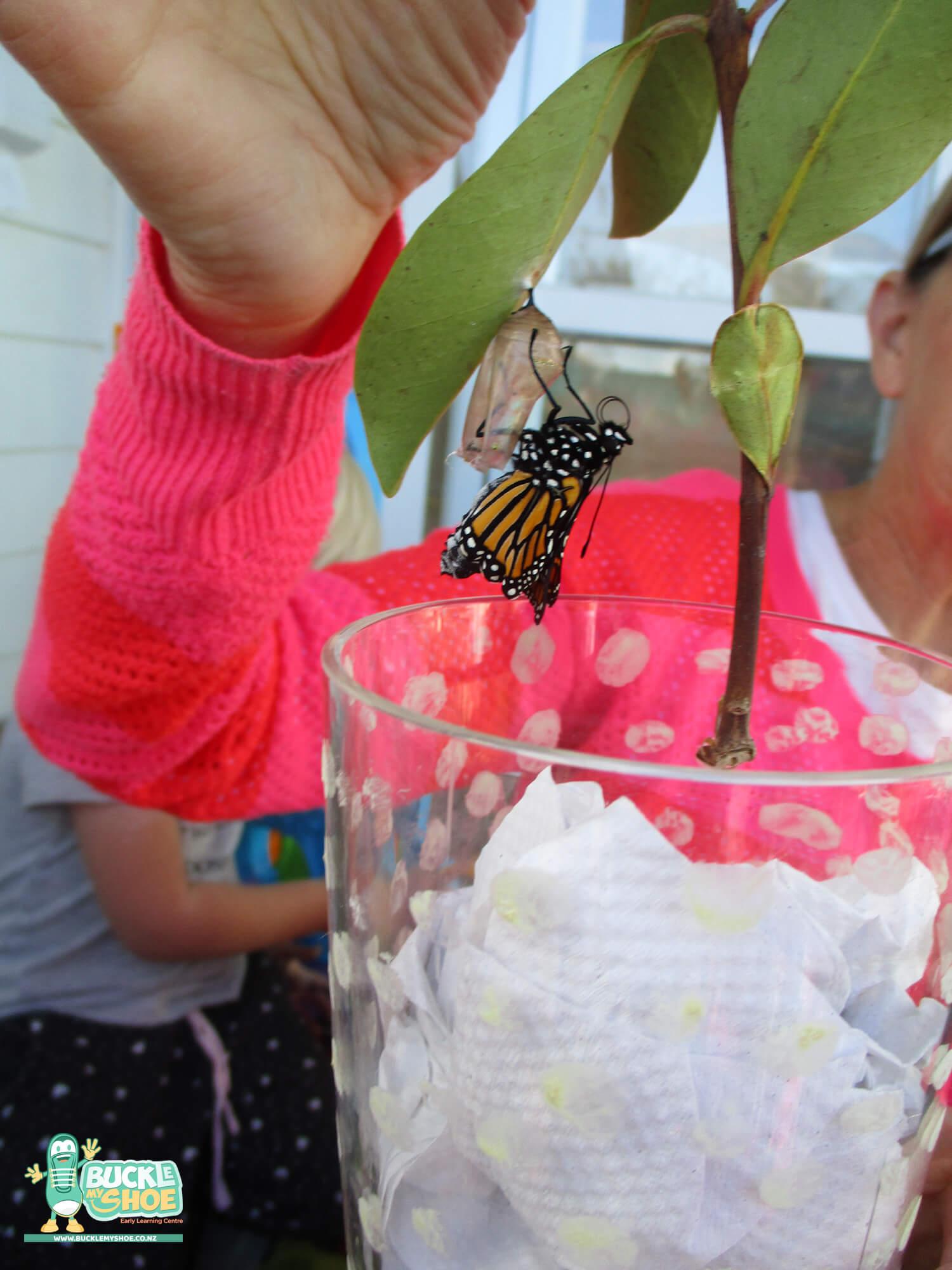 buckle-my-shoe-childcare-tauranga-butterfly-11.jpg