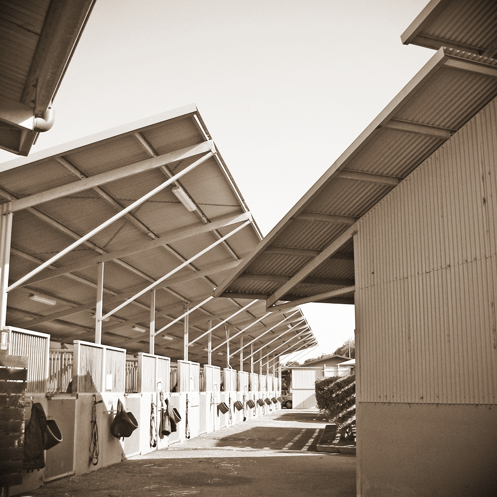 'Markdel', Freedman Brothers Thoroughbred Training Complex