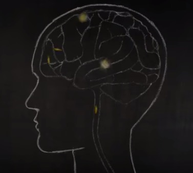 Want more food for thought? Watch this TED-ed video:   Are you a body with a mind or a mind with a body?