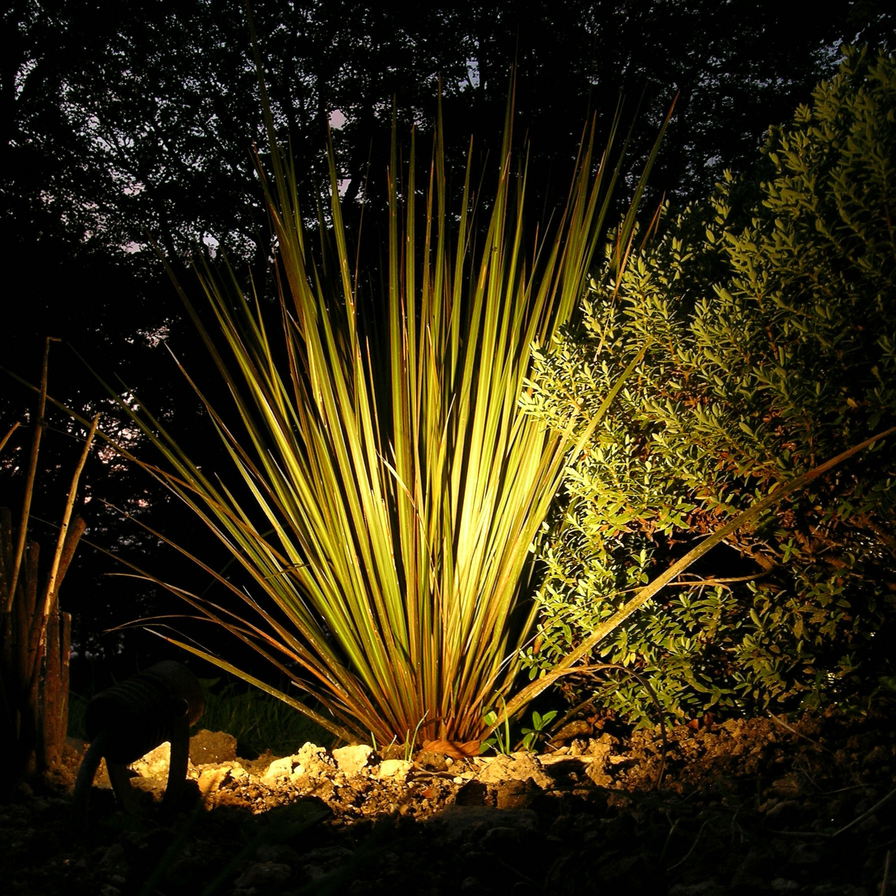 eleanor-bell-garden-lighting-led-uplight.jpg