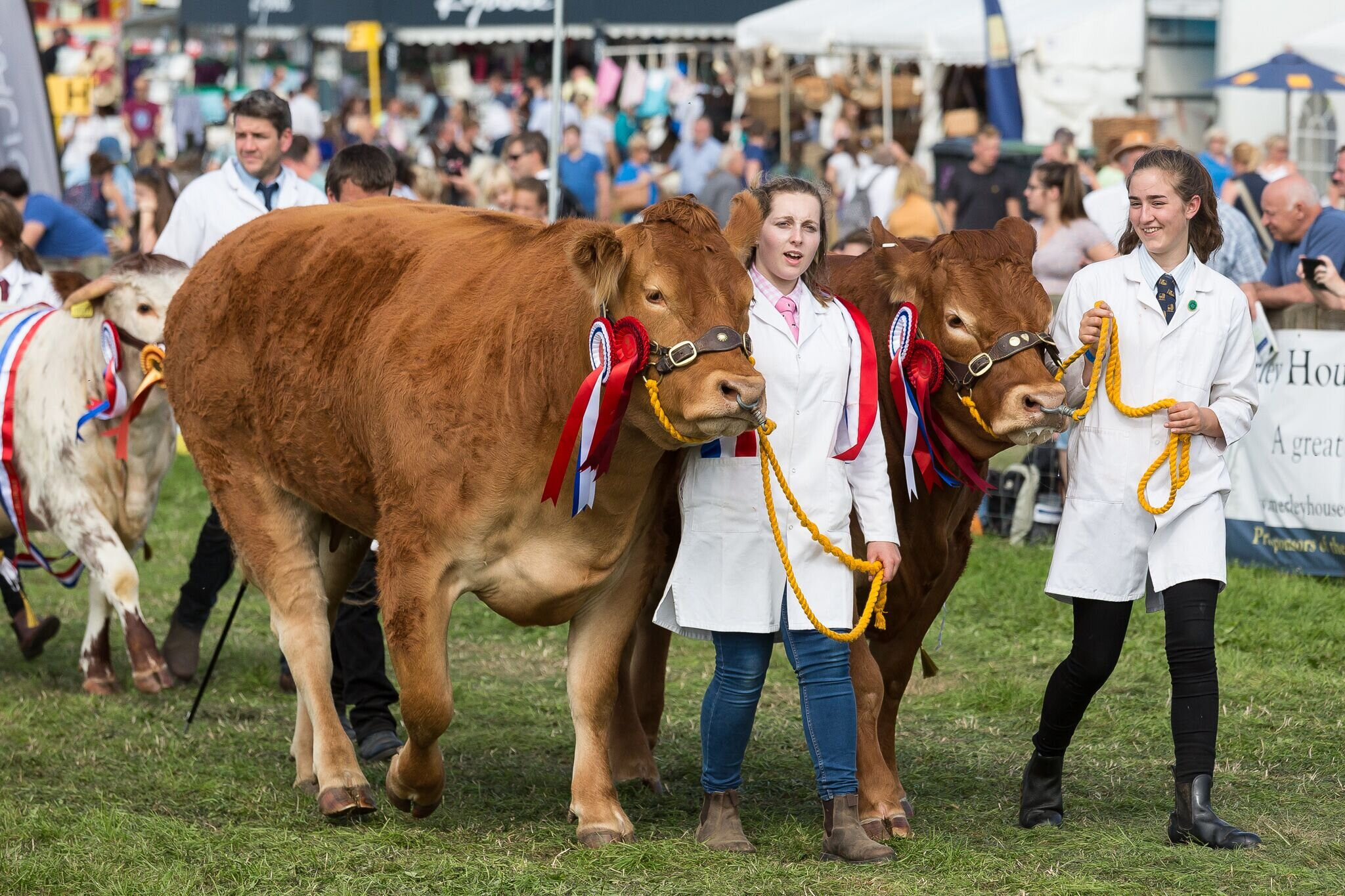 Award-winning cows at the Dorset County Show