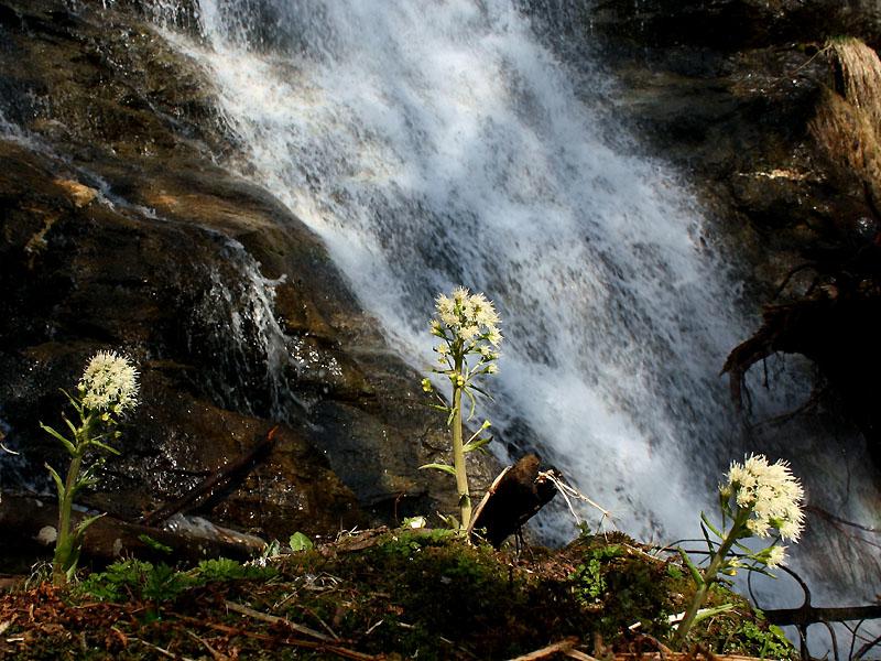 A waterfall along the way