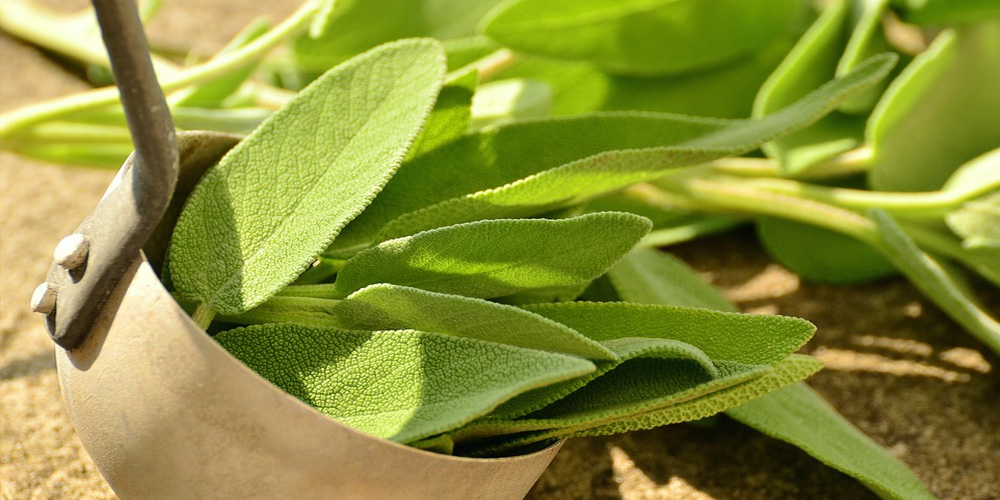 certified-ingredients-sage.jpg