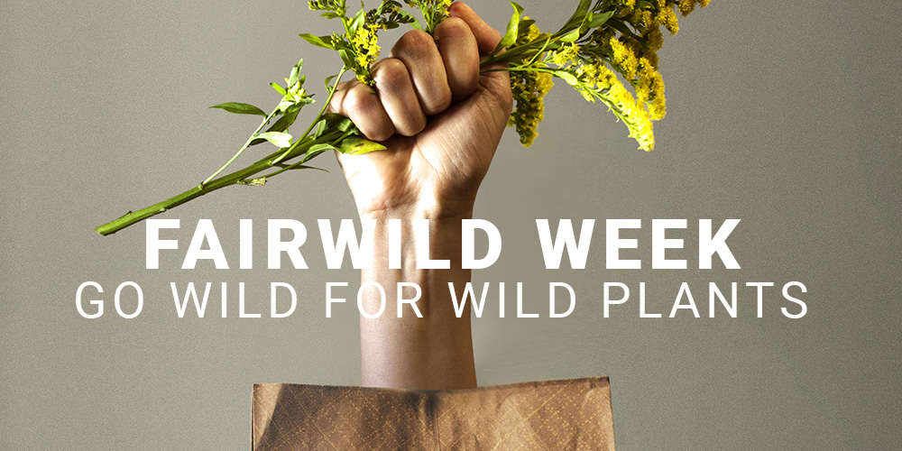 fairwild-week-2018-launch.jpg