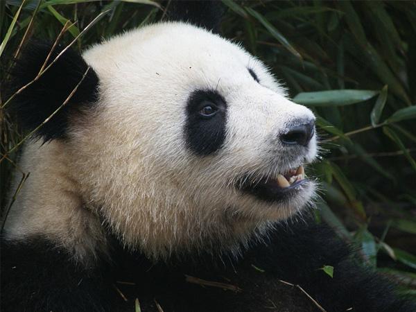 for-plants-panda.jpg