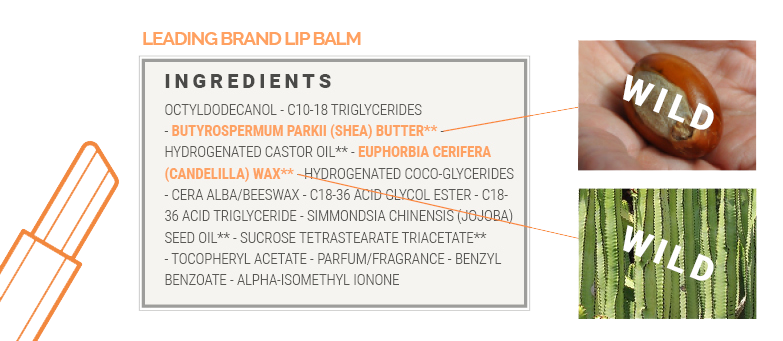 This is the ingredients list for a leading brand lip balm where we highlight the ingredients that are wild collected