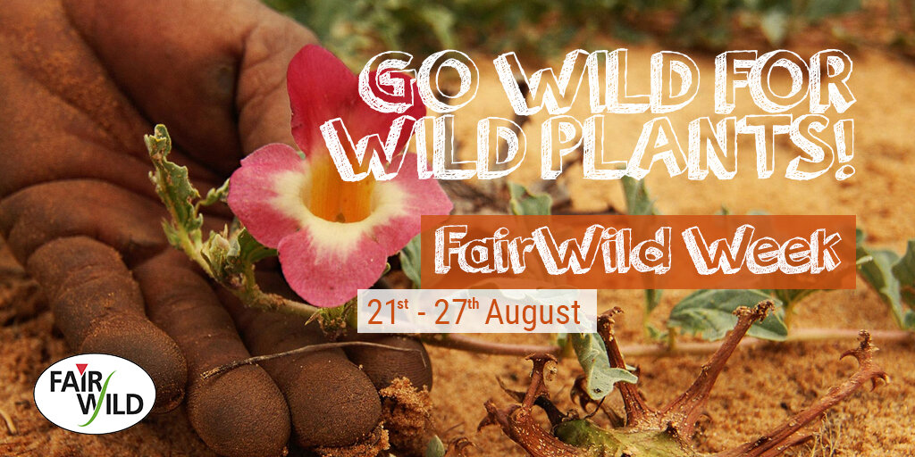 fairwild-week-announce.jpg