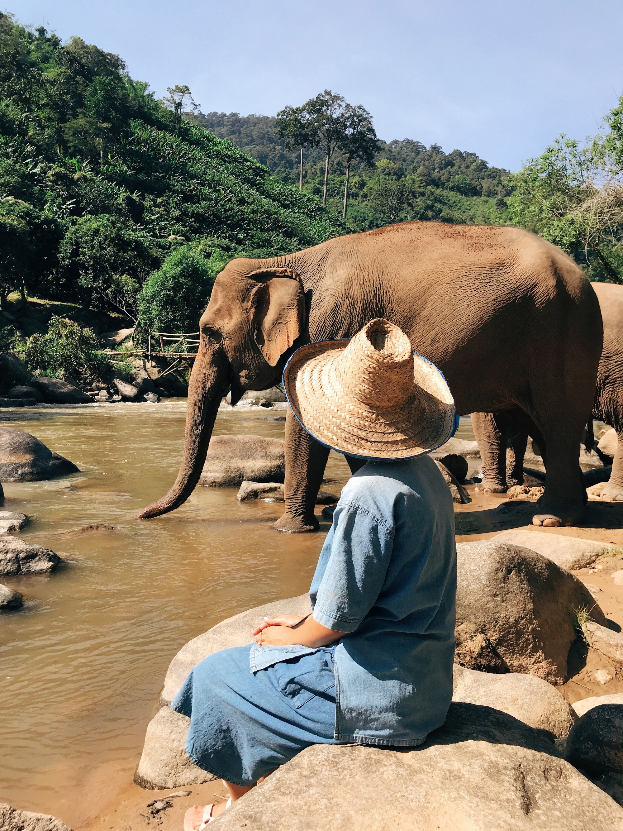 Chiang Mai Thailand Travel Guide - Claire Eliza - Elephant Nature Park 2.JPG