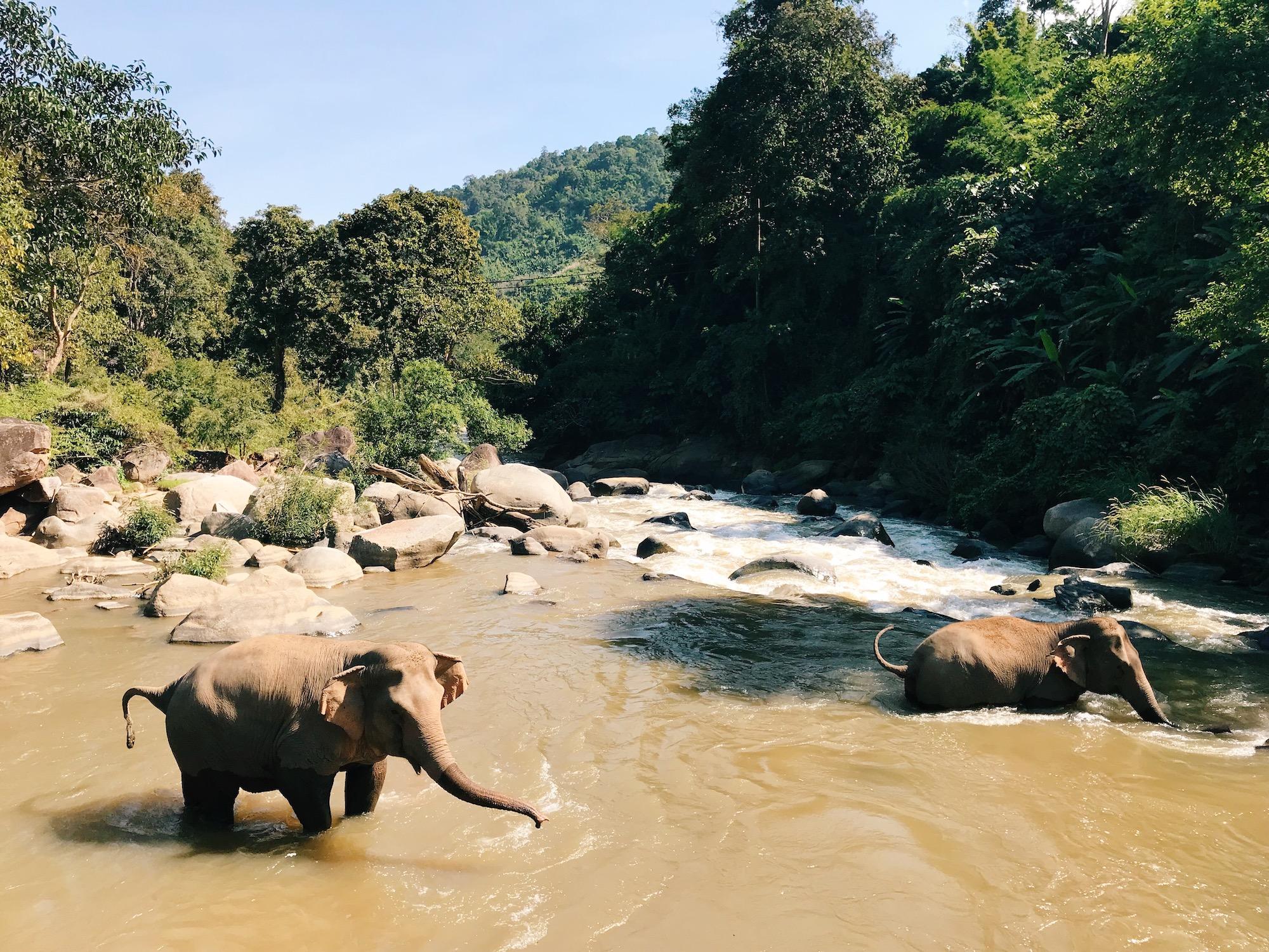 Chiang Mai Thailand Travel Guide - Claire Eliza - Elephant Nature Park 3.JPG