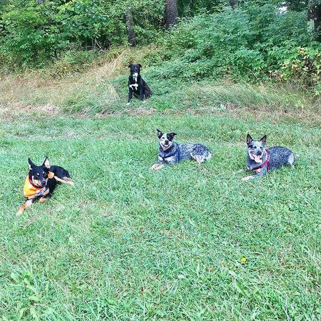 🐾Keepin' cool 😎 🐾 . 🐾 .  #dogcamp #dogsonadventures #dogsofinstagram #vtdogs #dogstagram #doglovers #hikingwithdogs #dogsthathike #dog #outdooradventures #vermont #liveoutdoors #summer