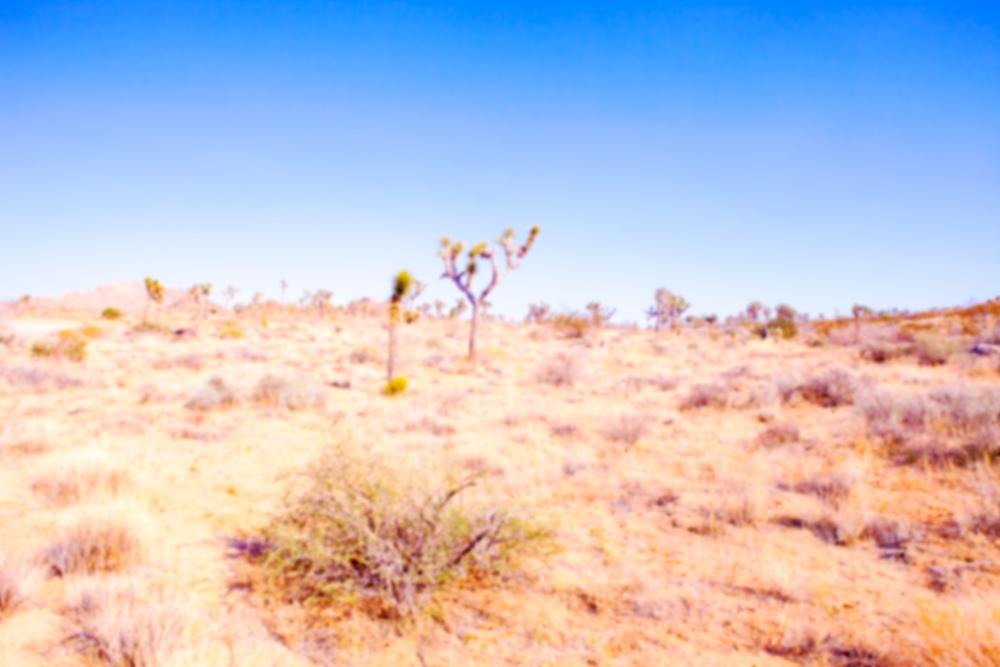 Desert Plains