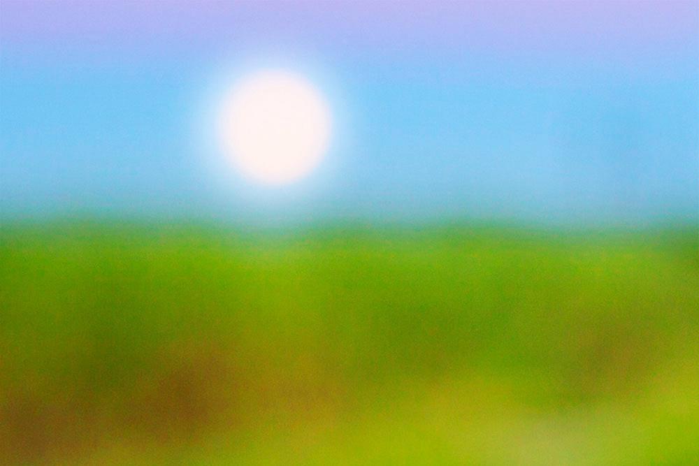 Sugarcane Moonlight
