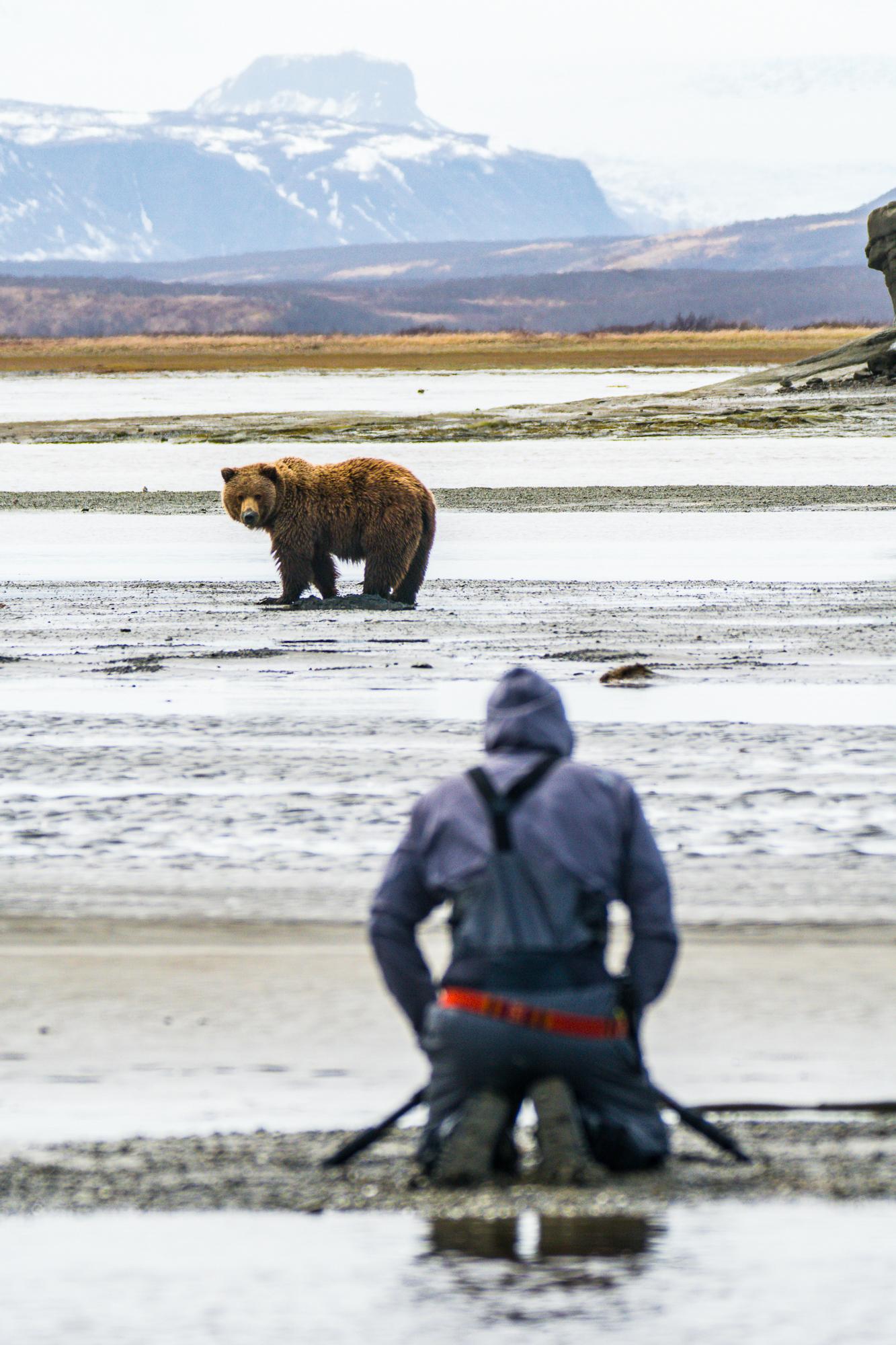 Bear Clamming