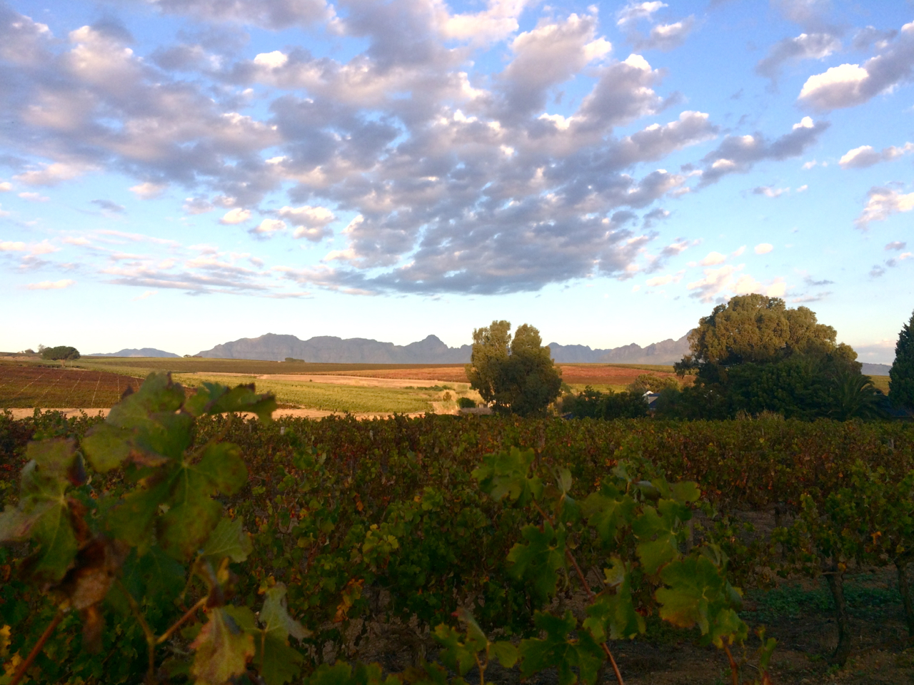 "Vineyards around Stellenbosch. Mountains, to me, have to be purple to be ""real"" mountains."