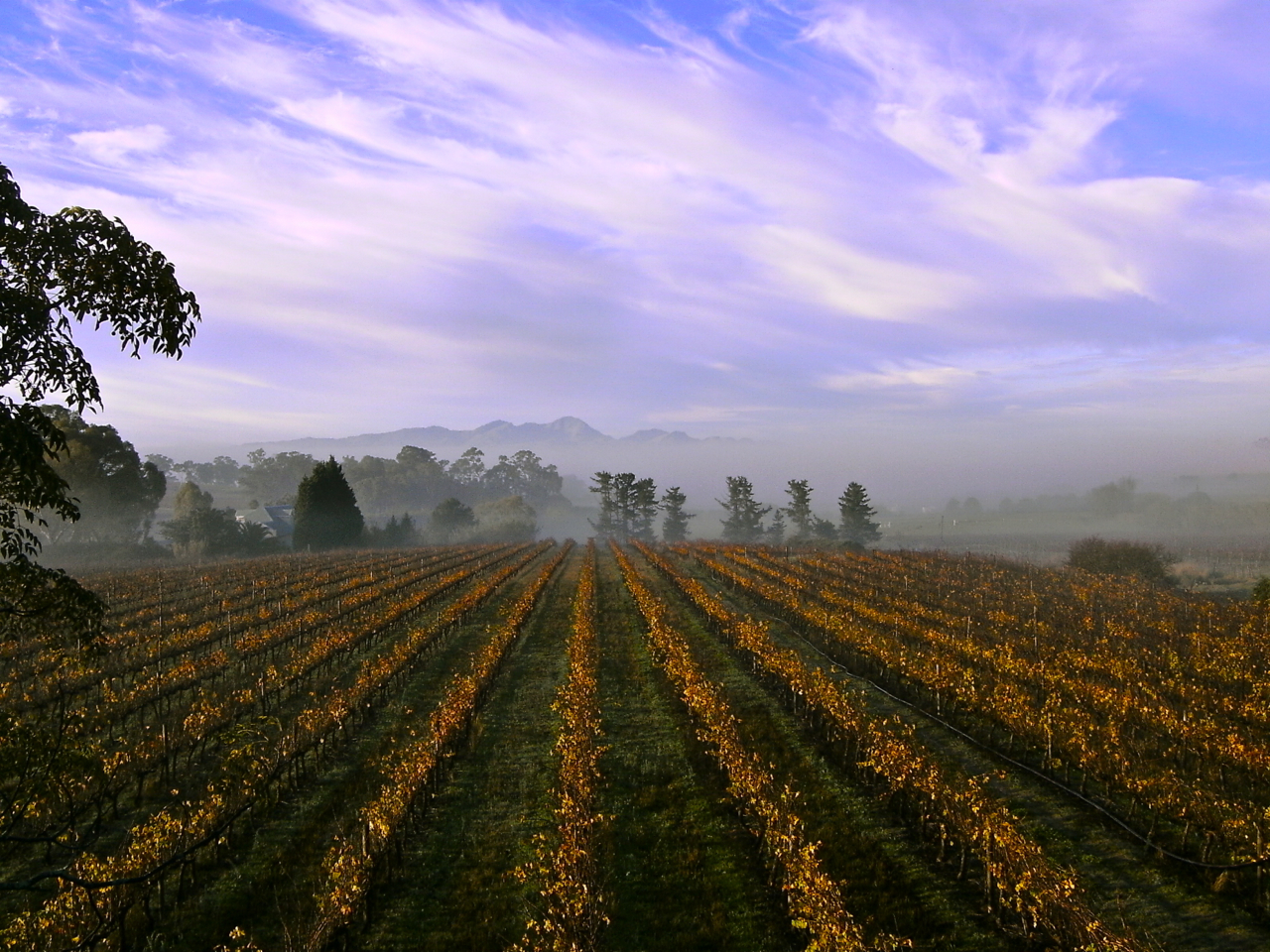 Our 1990 vineyard of cabernet sauvignon turning the colour of rust and amber and rubies in autumn.