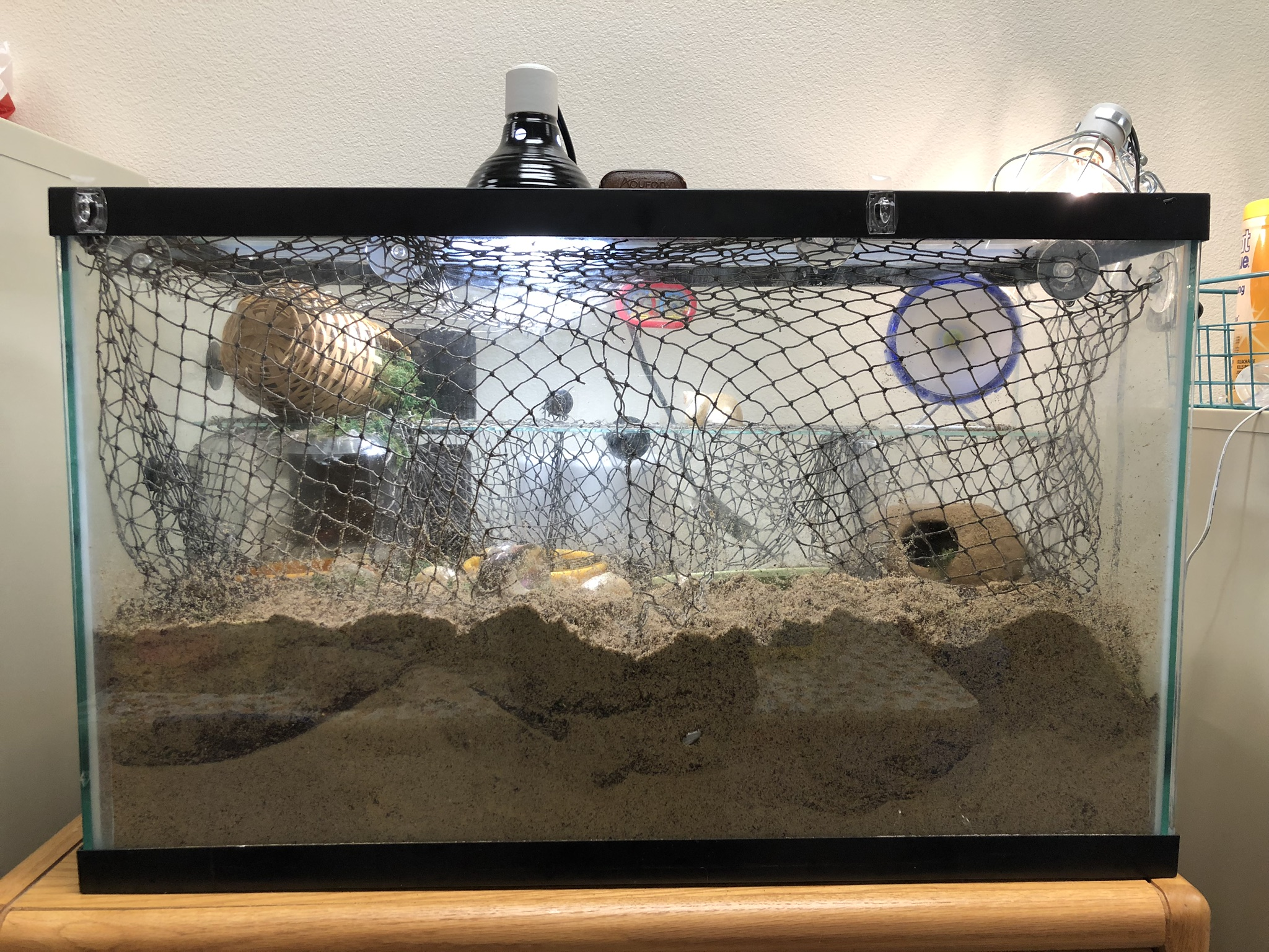 An appropriate tank for land hermit crabs.