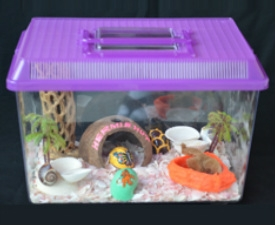 This is not an appropriate tank, but unfortunately is what many hermit crab sellers recommend.
