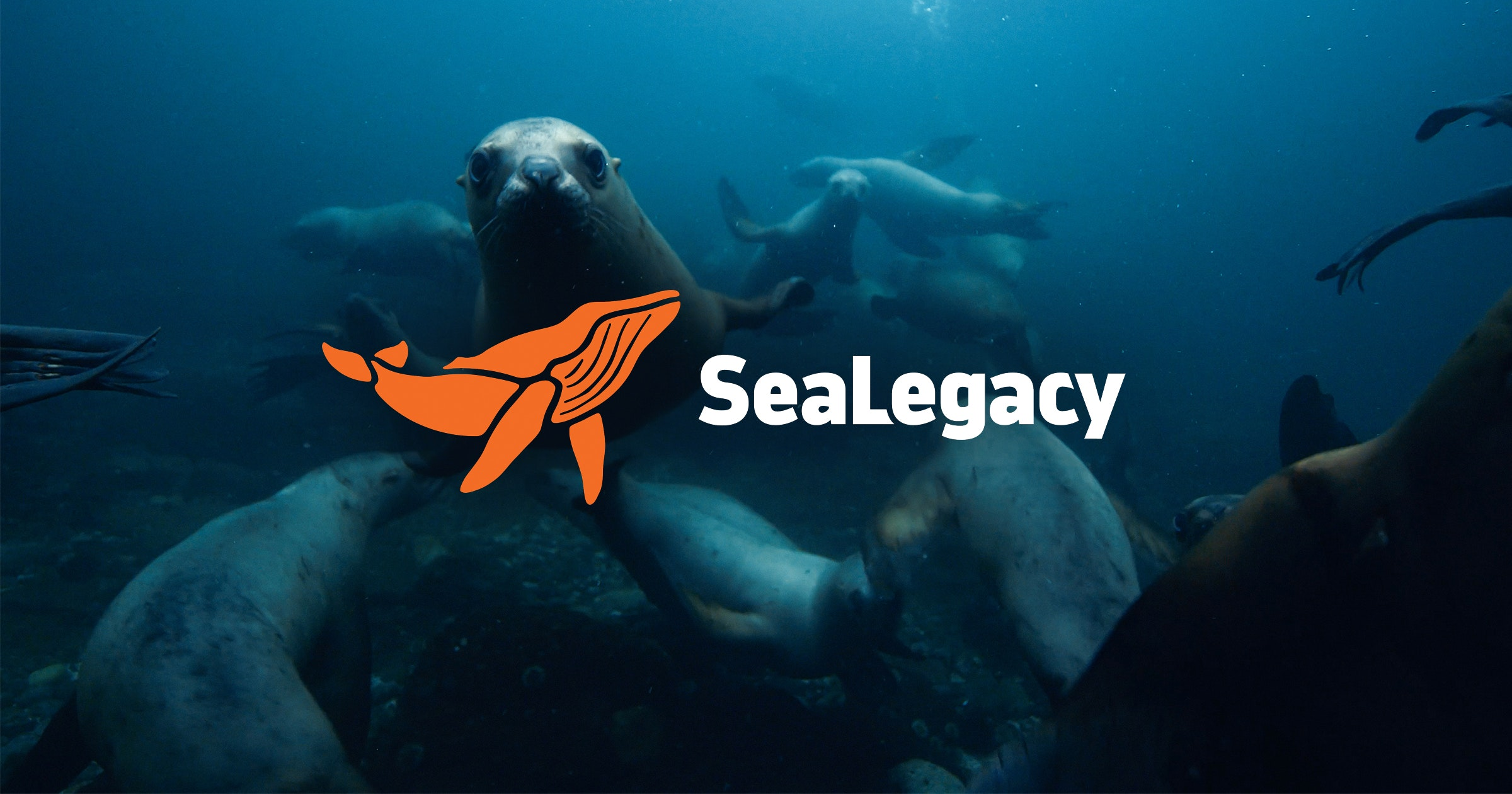 SEA LEGACY - When you choose to donate to Sea Legacy, your money goes towards helping a team of artists promote environmental change in our oceans. This program is founded by National Geographic photographer, Paul Nicklen, and his partner, Cristina Mittermeier who believe the most powerful way to create change is through visual storytelling. They are focused on creating a healthy ocean for all of the animals inside of it.