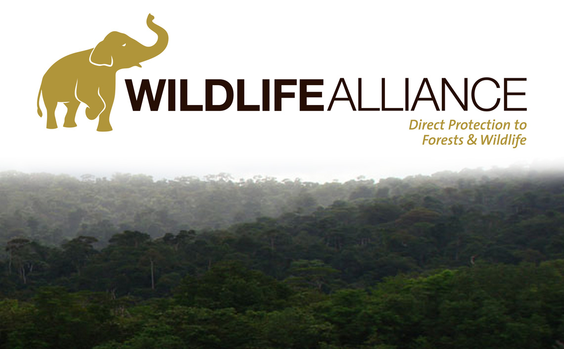 WILDLIFE ALLIANCE - When you choose to donate to the Wildlife Alliance, your money goes towards supporting dedicated advocates fighting for animal conservation. This group has nine programs that focus on various things, ranging from rainforest conservation to wildlife trafficking.