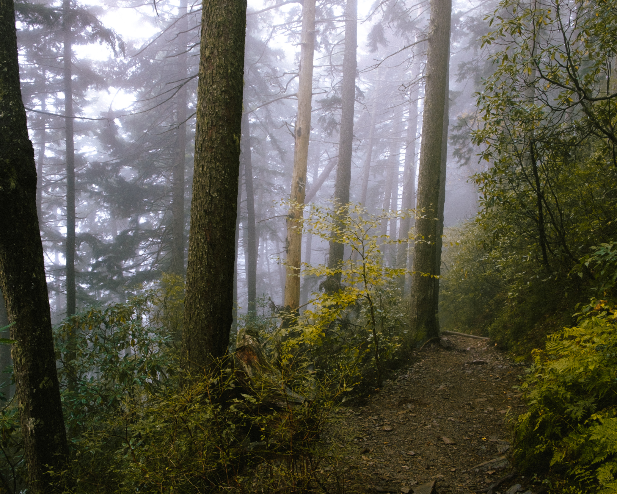 Fog drifting through the trees on the hike back down