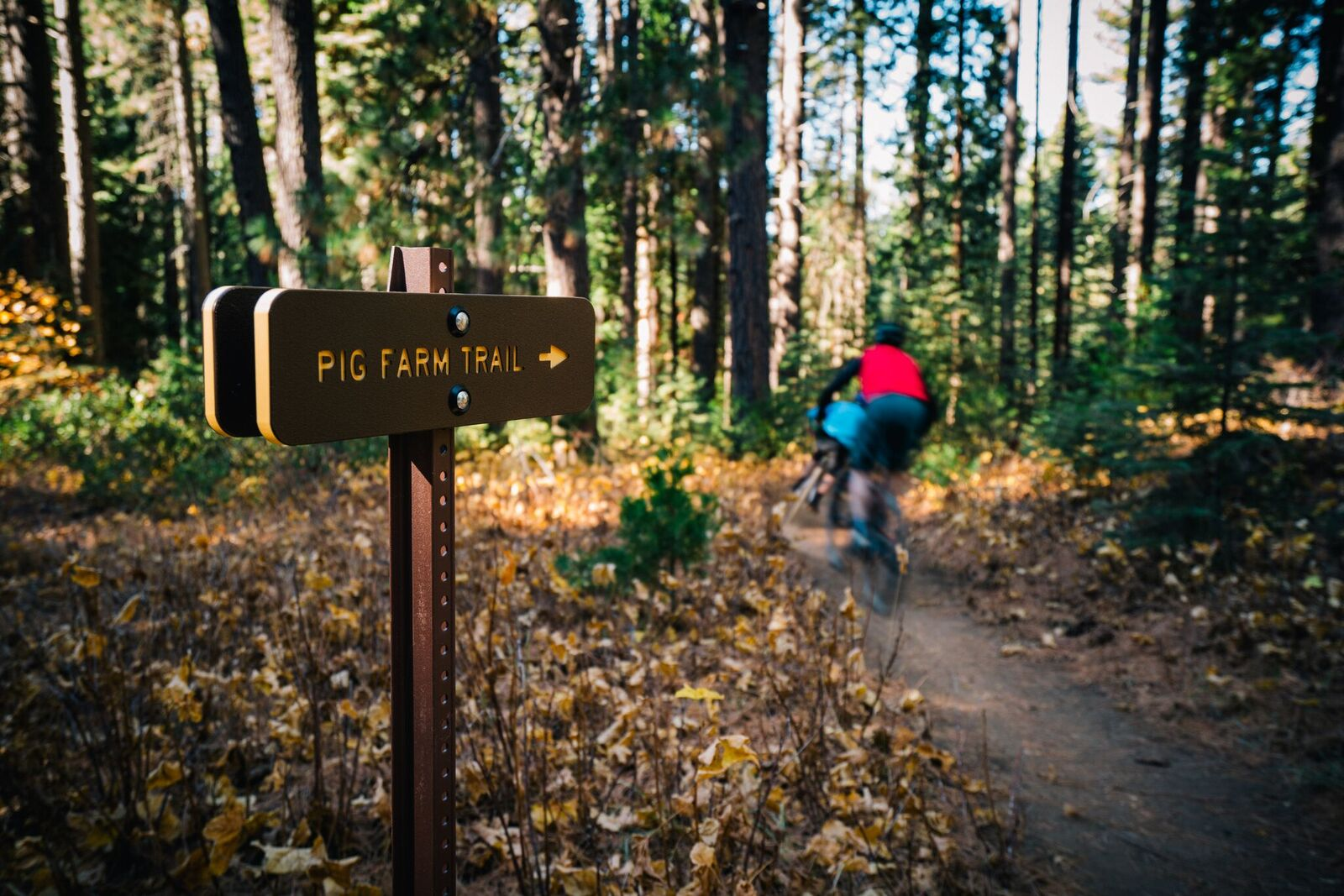 Gateway Tour - This is the perfect half day tour for all levels especially geared for family adventure. Smooth flowy singletrack with a variety of terrain will keep you smiling the whole time. This can be done as a shuttle or mellow climb from Shastice Park. Lunch and snacks can be provided! Starting cost 45.00 per person. Call to book a tour! (530)340-2908