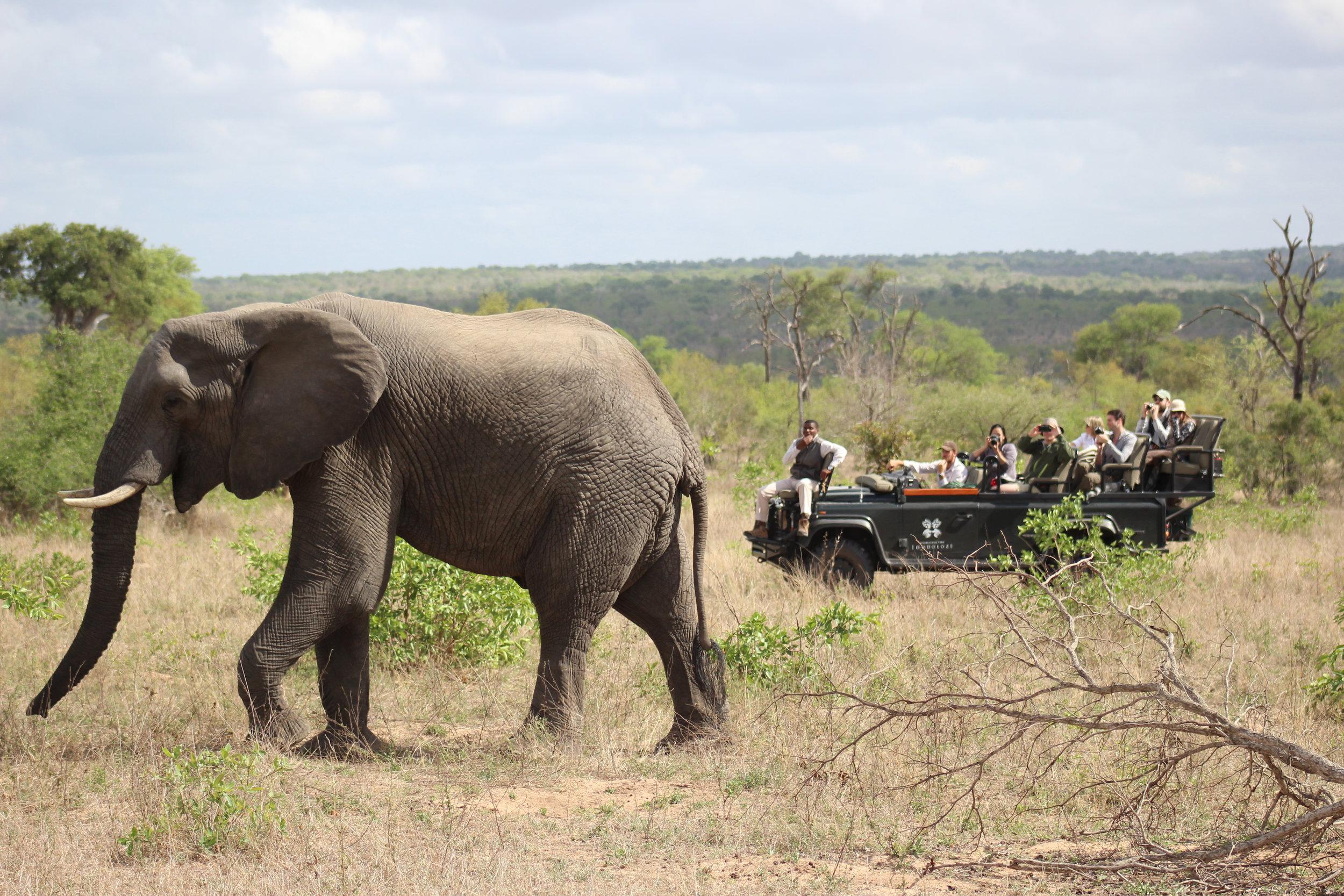 elephant safari south africa.jpg