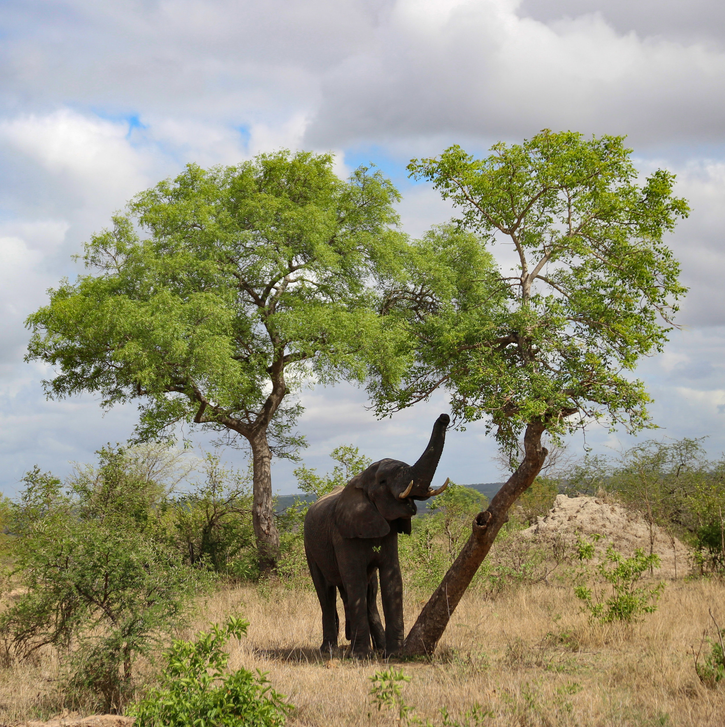 south africa elephant  (1 of 1).jpg