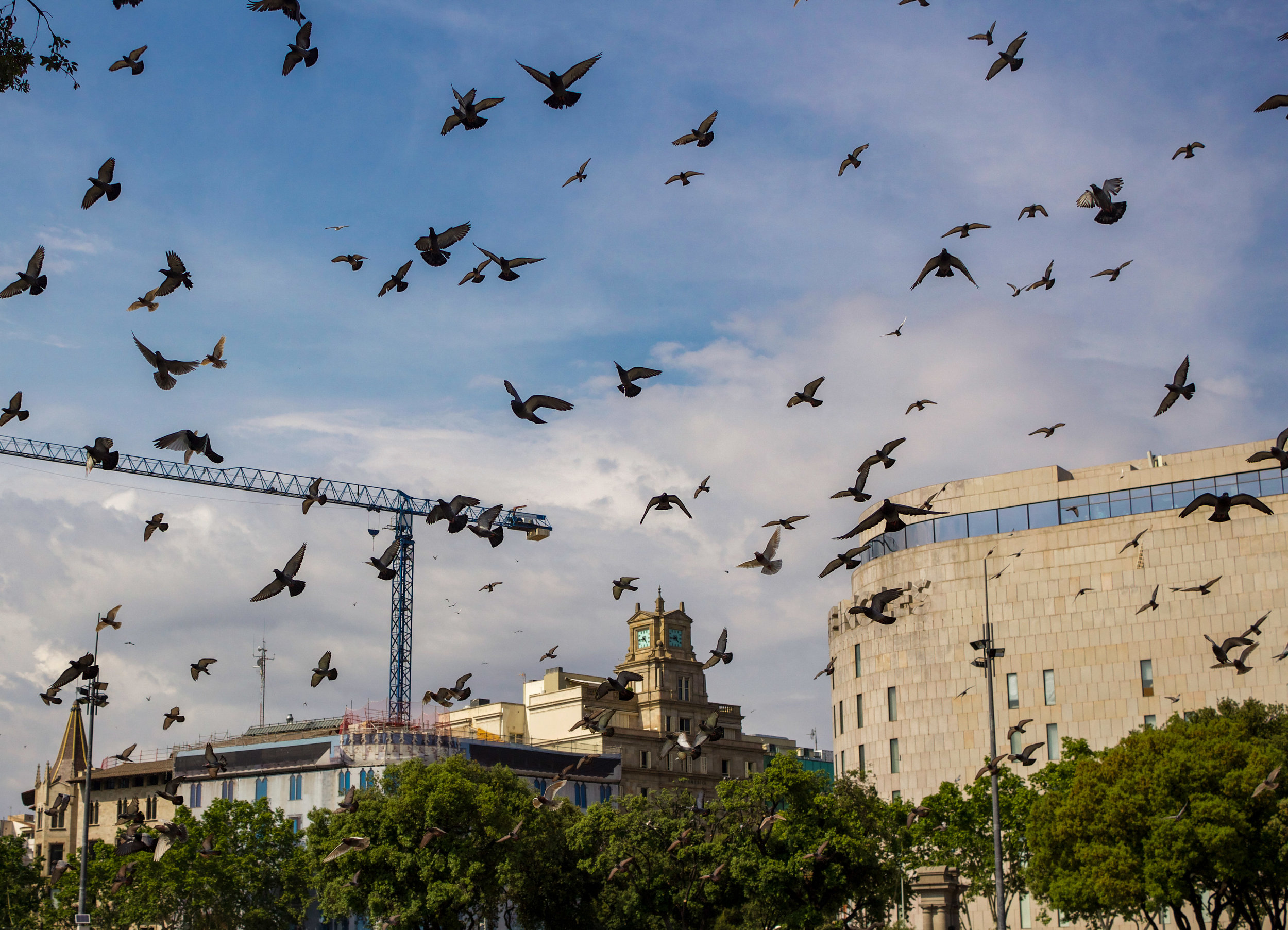 edited pigeons over barcelona (1 of 1).jpg