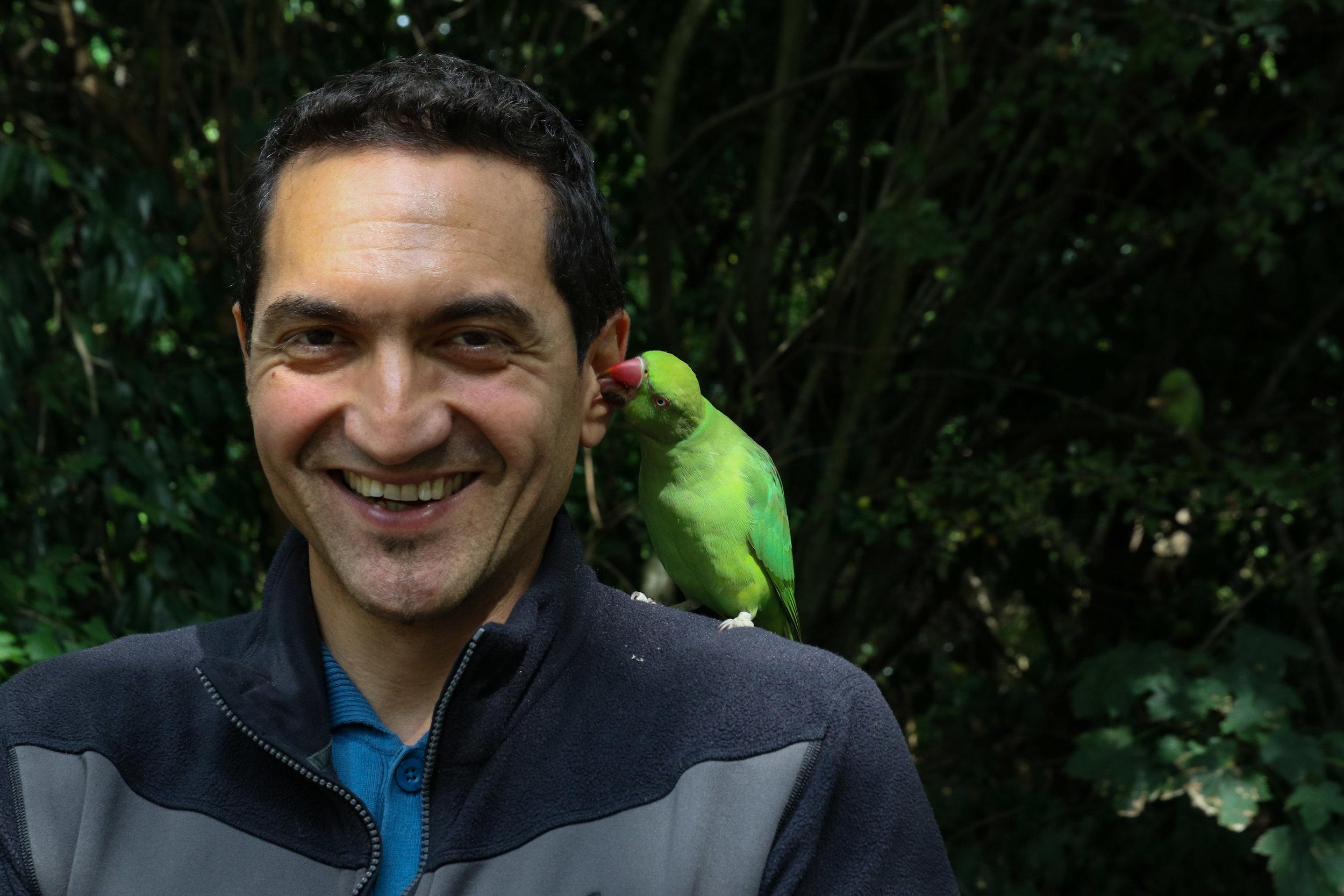 hyde park london roseringed parrot parakeet 1 (1 of 1).jpg
