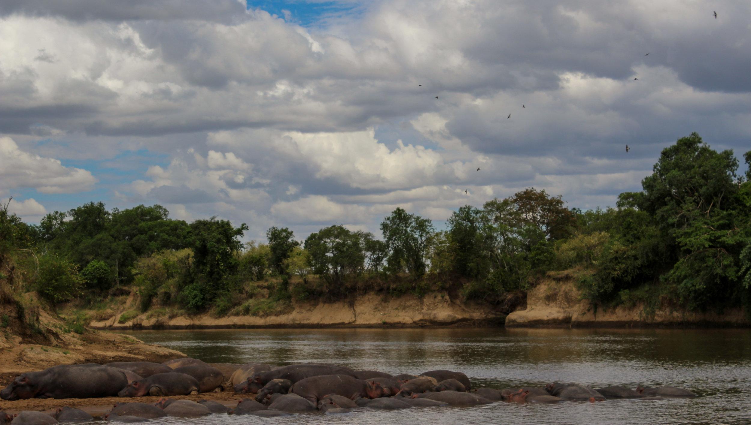 River hippos Kenya Africa (1 of 1).jpg