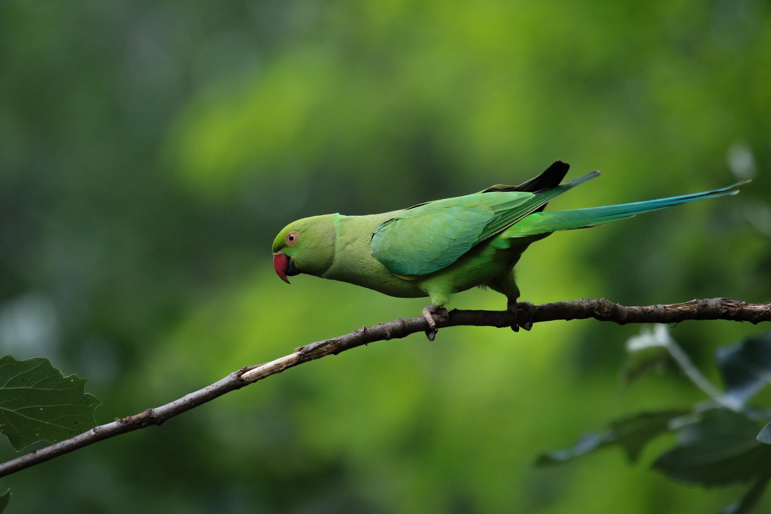 parrot hyde park branch (1 of 1).jpg