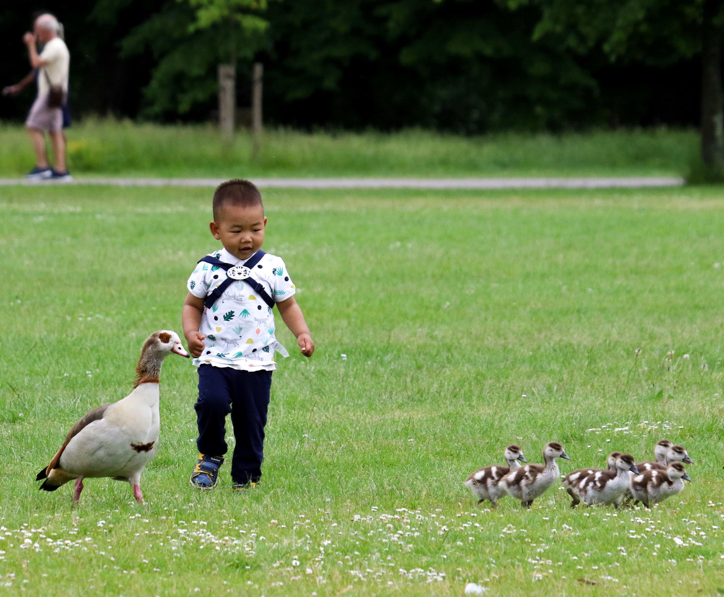 london hyde park boy and egyptian geese (1 of 1).jpg