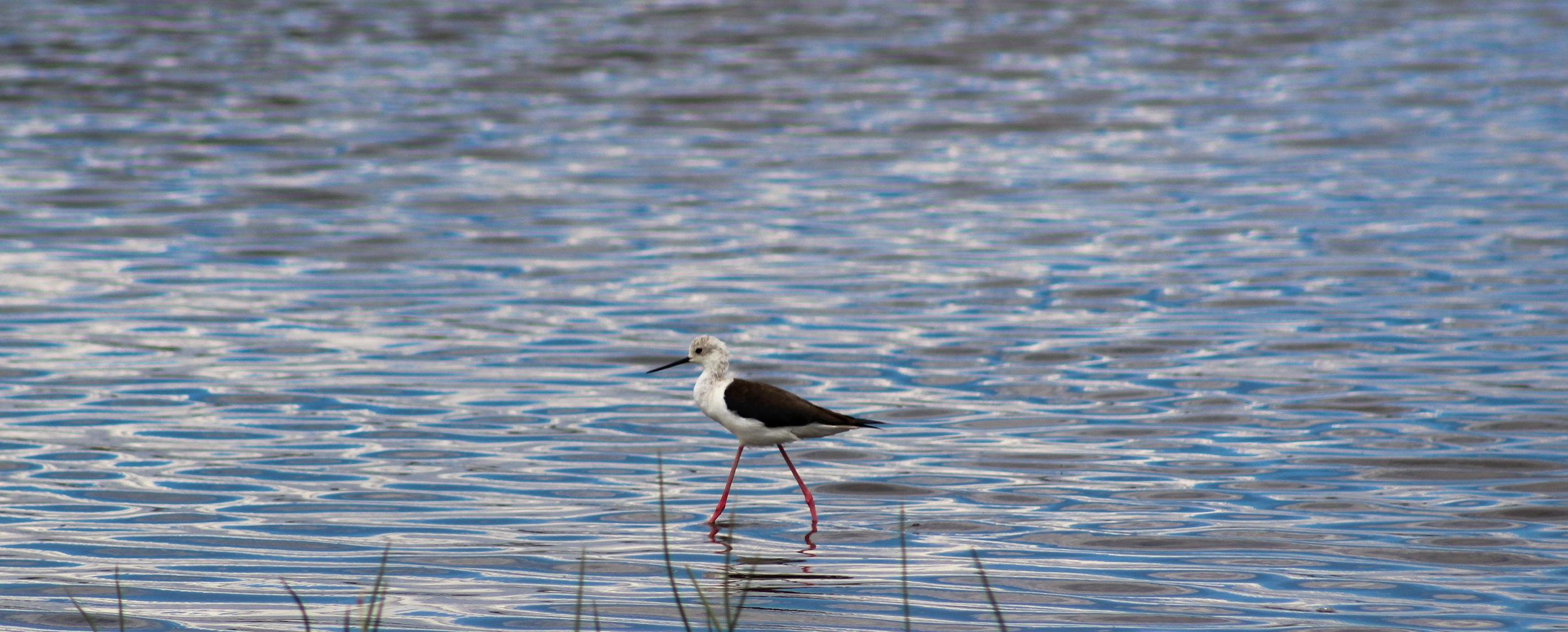 Bird Lake Kenya Africa (1 of 1).jpg