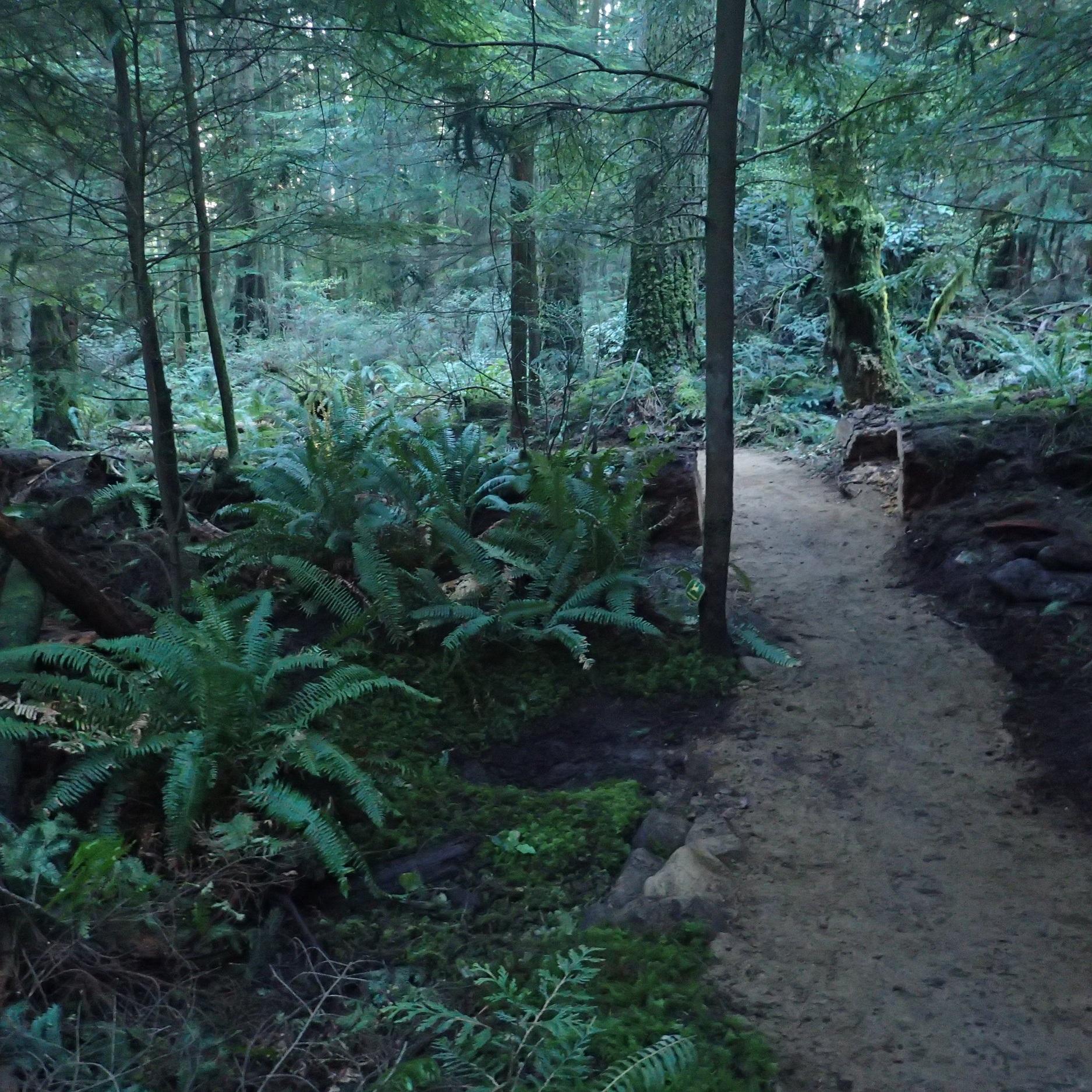 John Deer - With Drainage