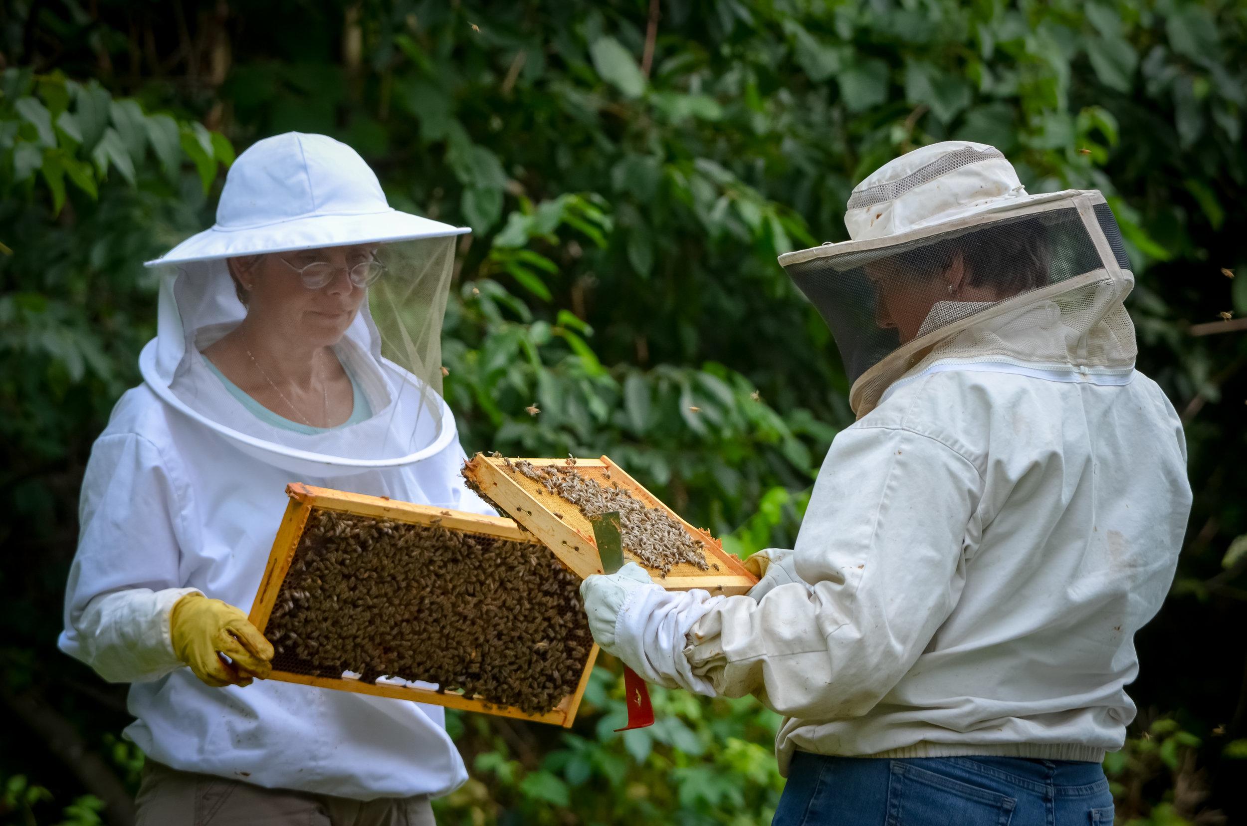 Bees-40.jpg