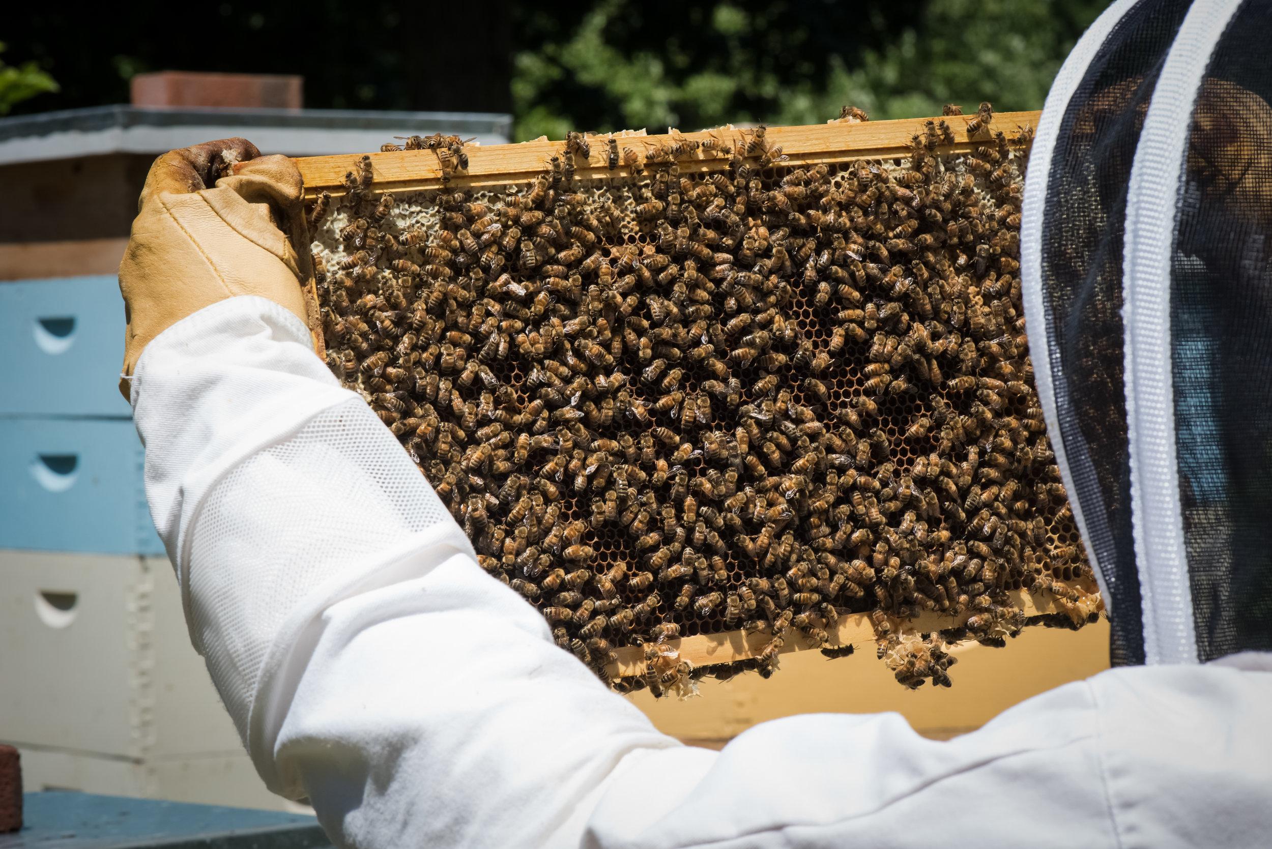 Bees-31.jpg