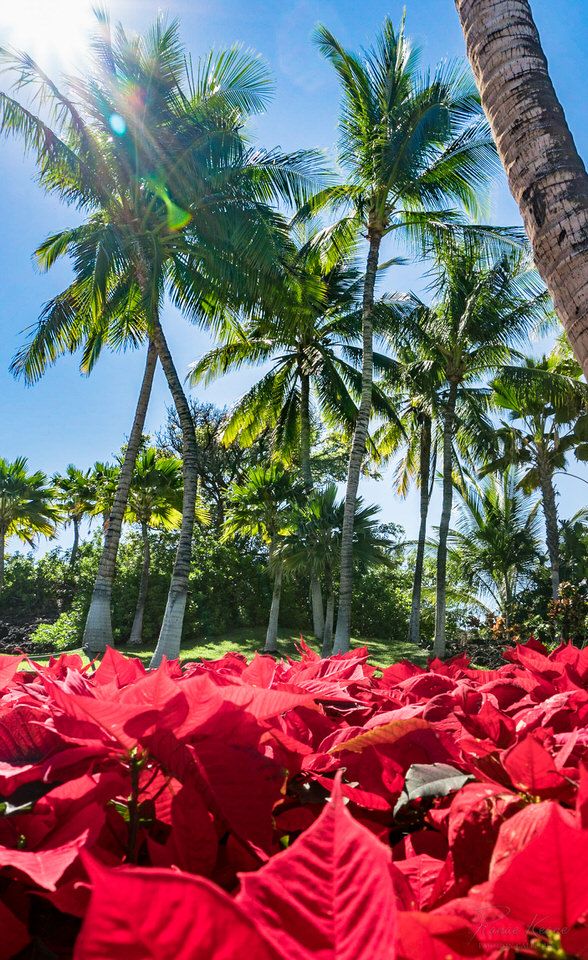 Holidays in Hawaii ©2017 Ranae Keane-Bamsey Photography www.EMo
