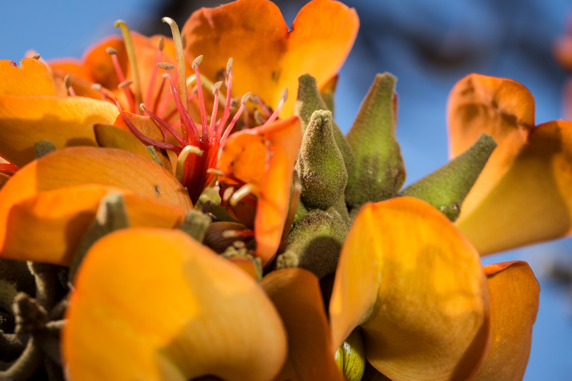 orange-seed-pod-willi-willi-tree-festival-Waikoloa-Village-Hawaii-Island-South-Kohala-344.jpg