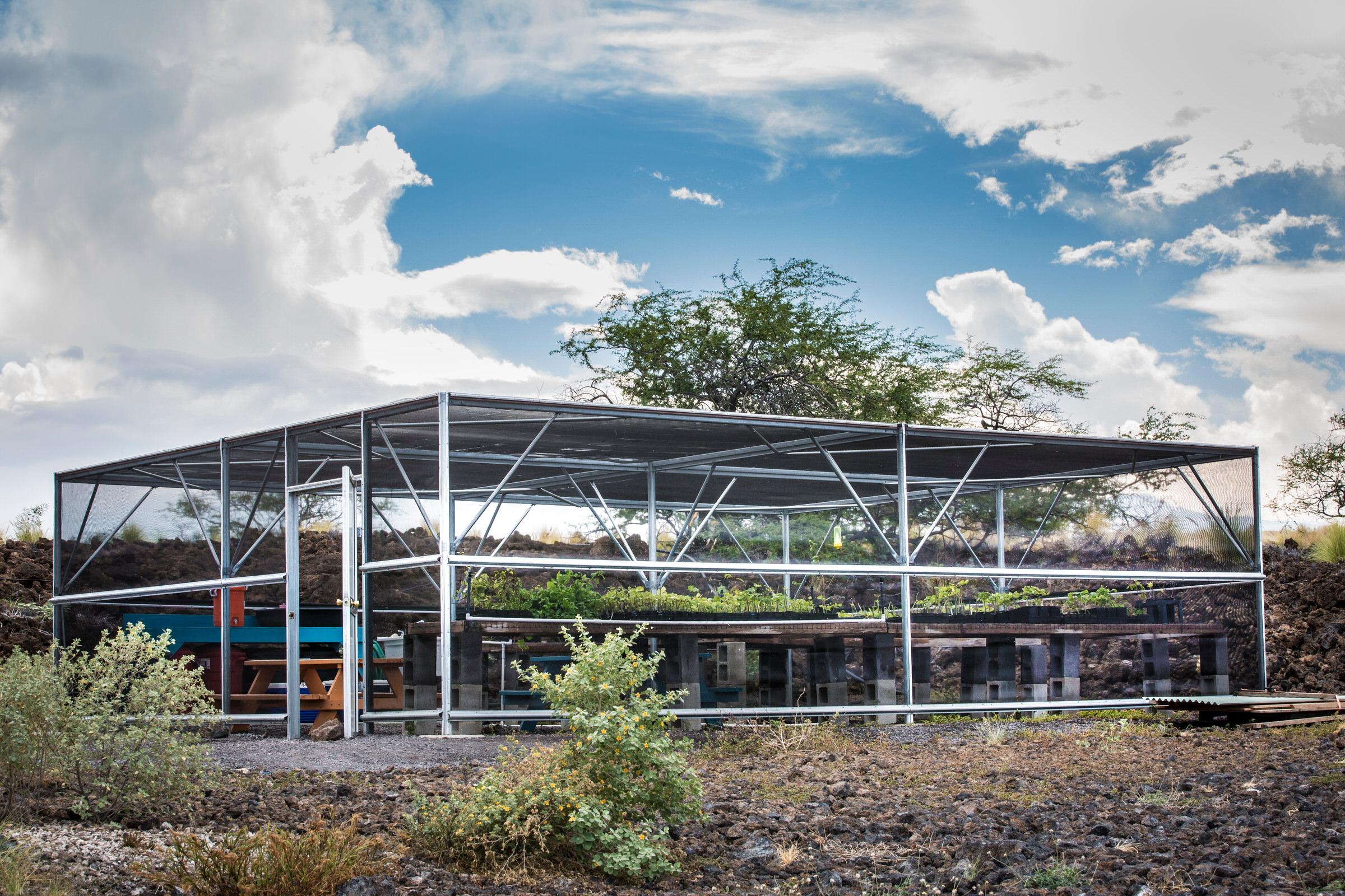 green-house-nusery-willi-willi-tree-festival-Waikoloa-Village-Hawaii-Island-South-Kohala-329.jpg