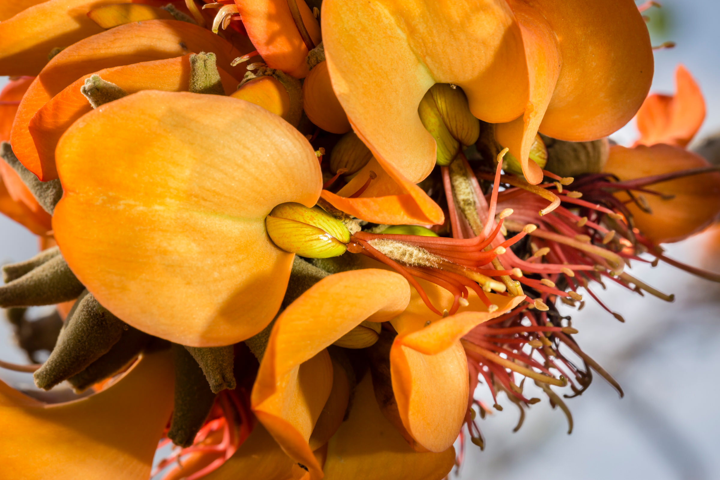 dry-forest-preserve-flowering-willi-willi-tree-festival-Waikoloa-Village-Hawaii-Island-South-Kohala-347.jpg