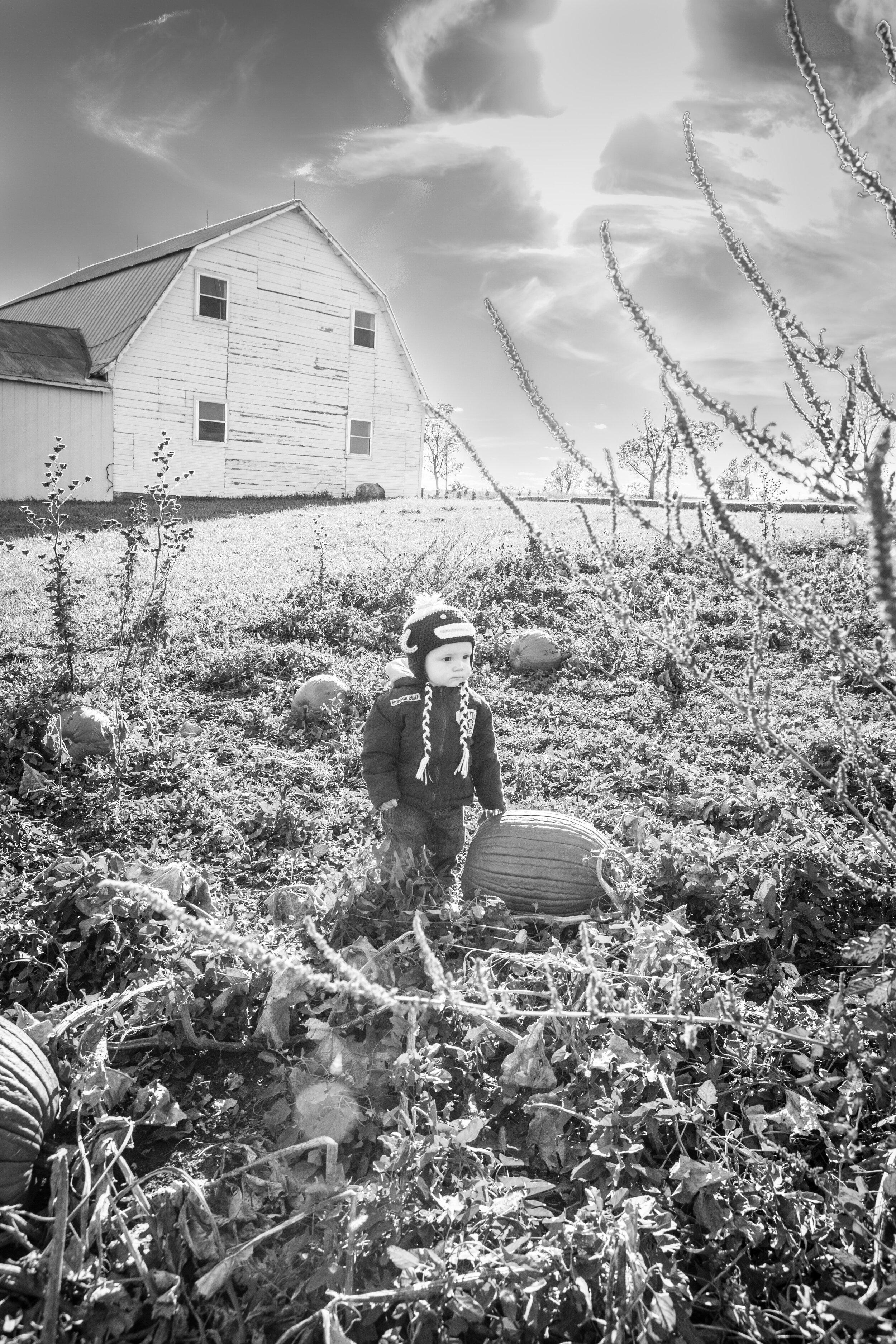 farm-toddler-fall-pumpkin-patch-little-boy- Photography by Ranae Keane.jpg