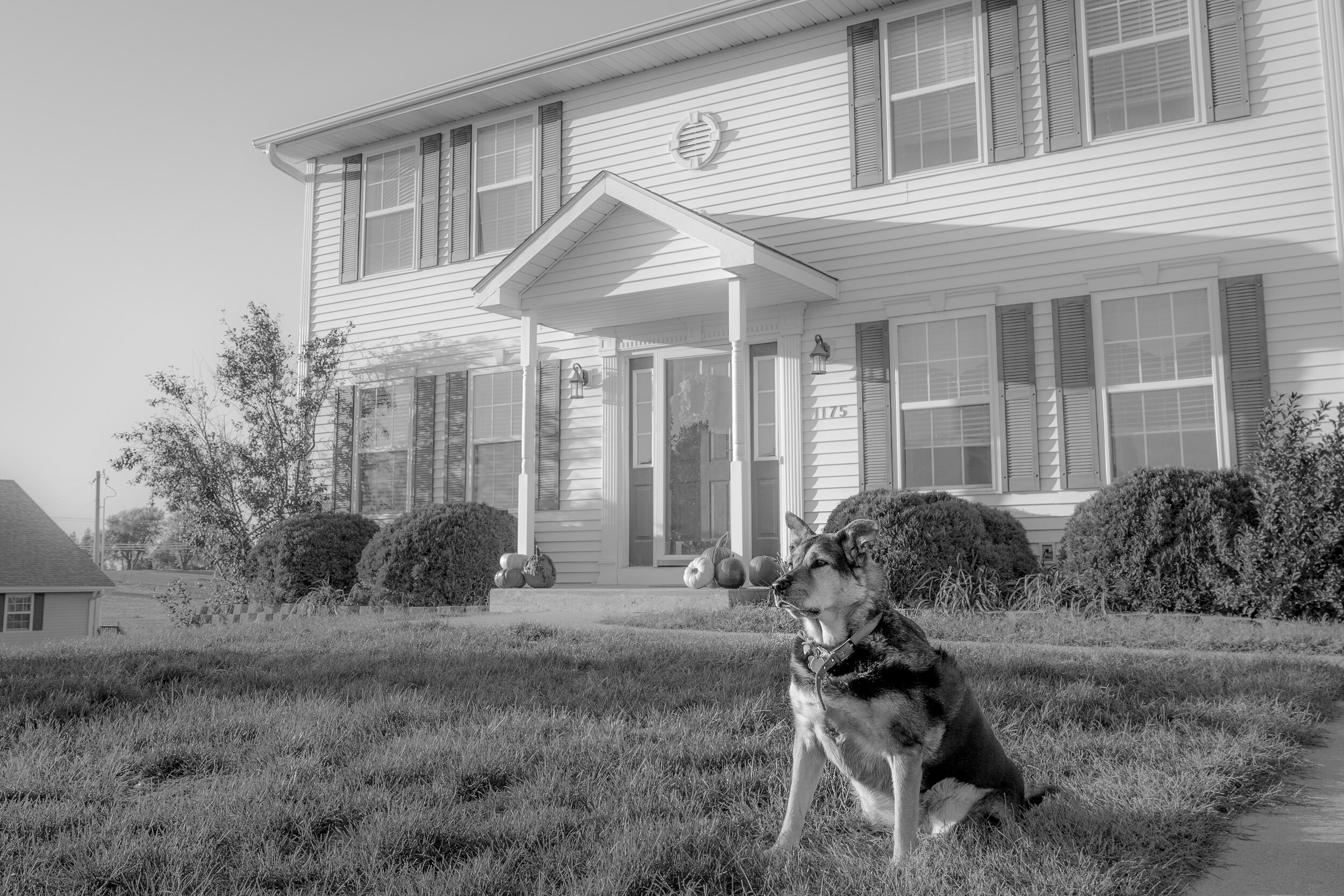 dog-pets-home-protector- Photography by Ranae Keane.jpg